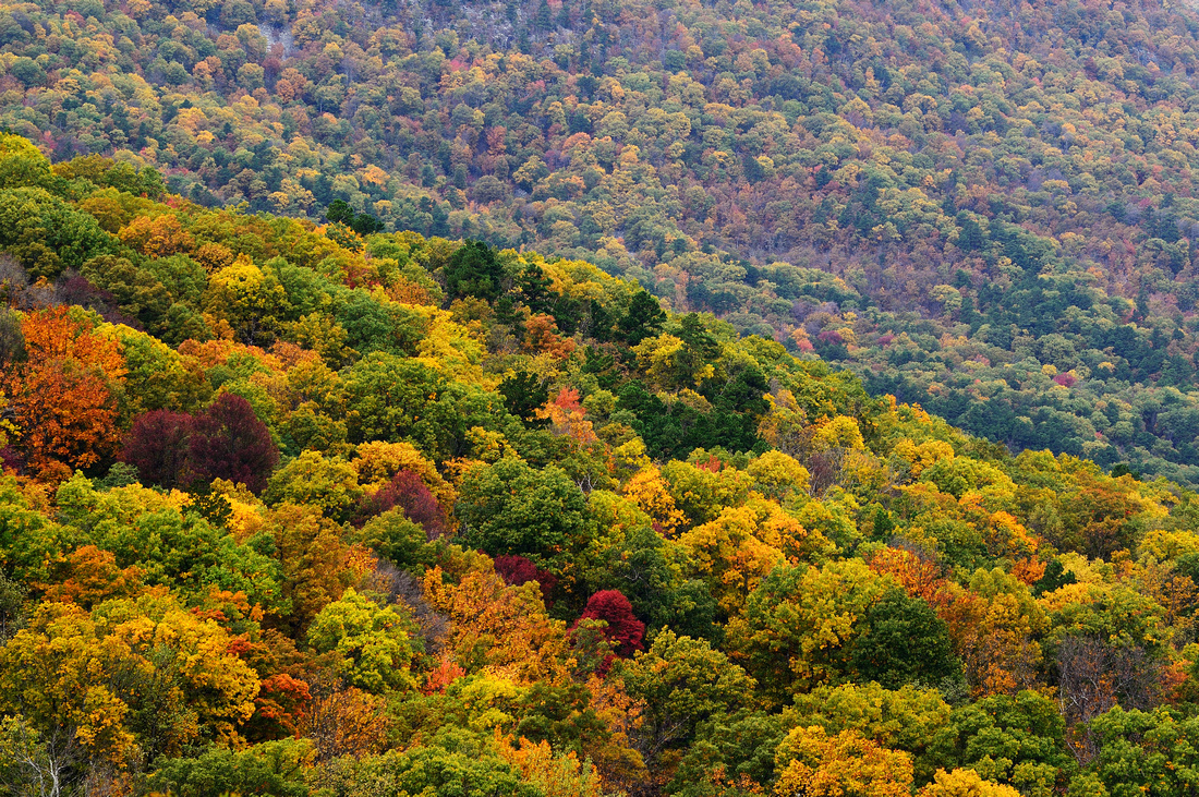 Ouachita Autumn