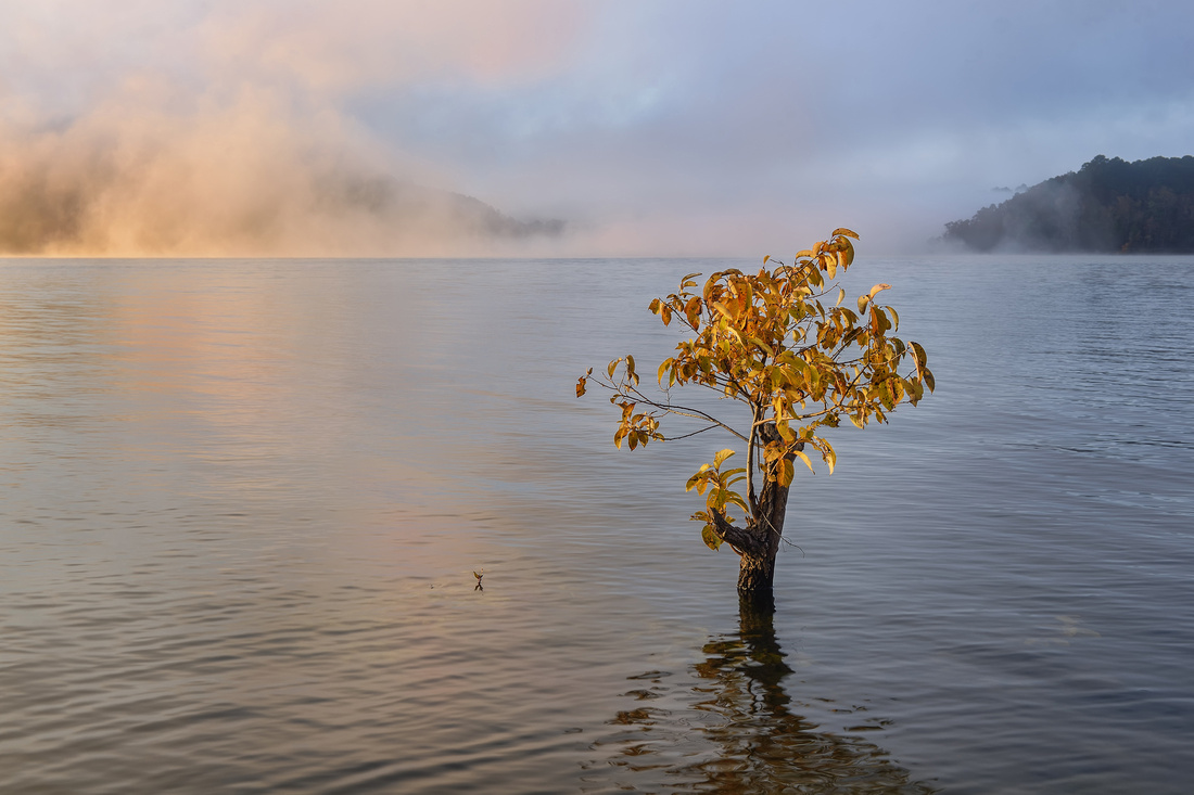 Sapling: Broken Bow Lake