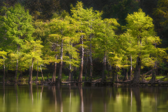 Cypress on the Mountain Fork River