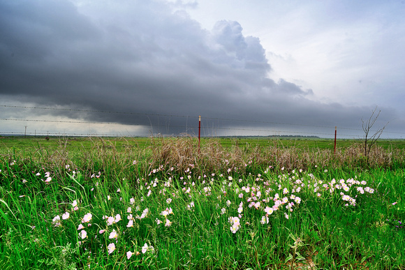 Primrose and Thunderstorms